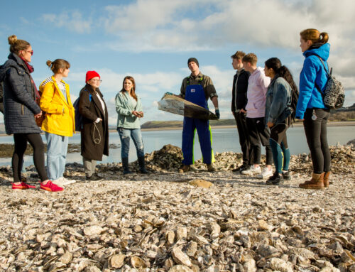 Sligo Oyster Experience​ Launches Sligo Oyster Farm Tour