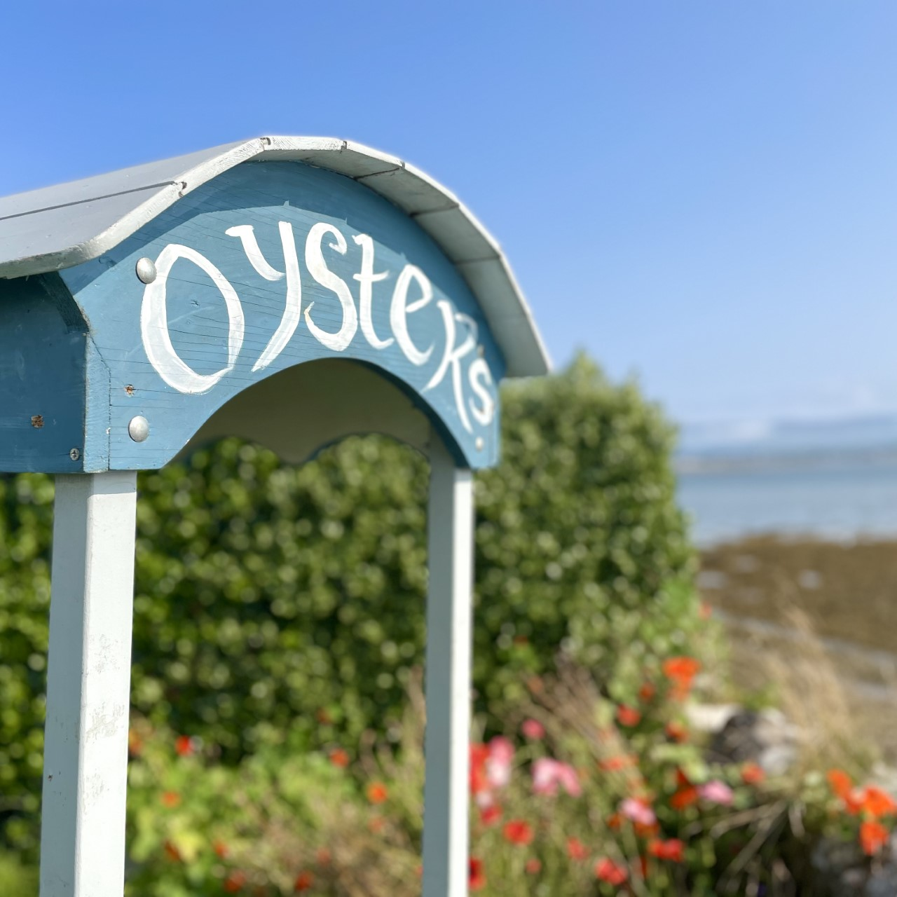 Oyster Cart on Oyster Farm Tour